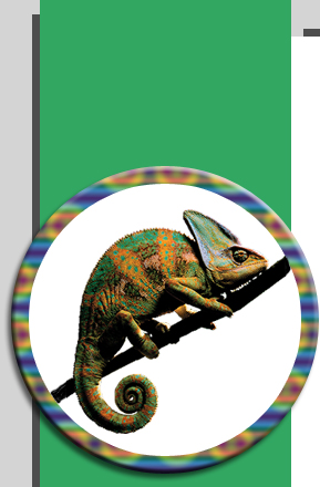Chameleon Communications - Fine Commercial Offset Printers